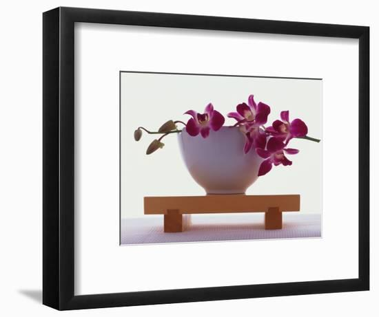Magenta Orchids in White Bowl-Colin Anderson-Framed Photographic Print