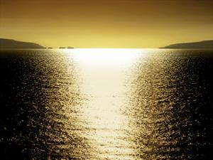 Sunlight Reflection - Golden by Maggie Olsen