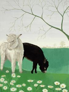 Donkeys and Daisies by Maggie Rowe