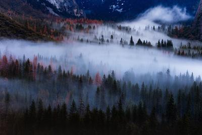 Magical Flow Mesmer Fog & Light Trees Sark Yosemite Winter Storm Valley-Vincent James-Photographic Print
