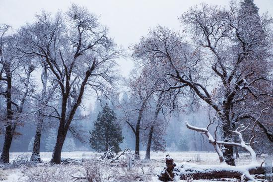 Magical Snow in the Valley El Capitan Meadow Trees & Mist Yosemite Valley-Vincent James-Photographic Print