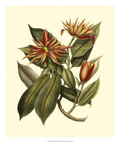 Magnificent Foliage I--Giclee Print