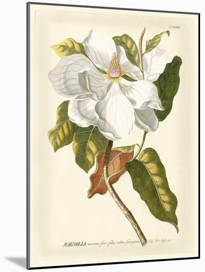 Magnificent Magnolias I-Jacob Trew-Mounted Premium Giclee Print
