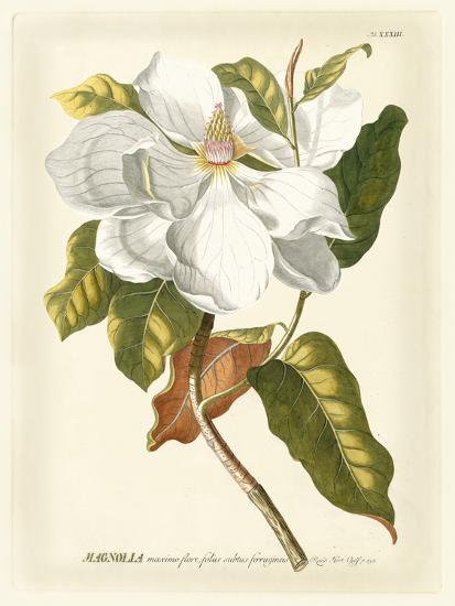 Magnificent Magnolias I-Jacob Trew-Art Print
