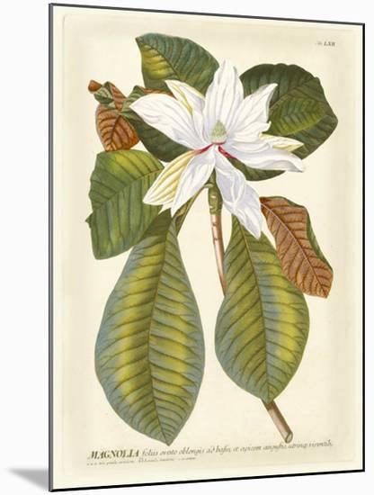 Magnificent Magnolias II-Jacob Trew-Mounted Giclee Print
