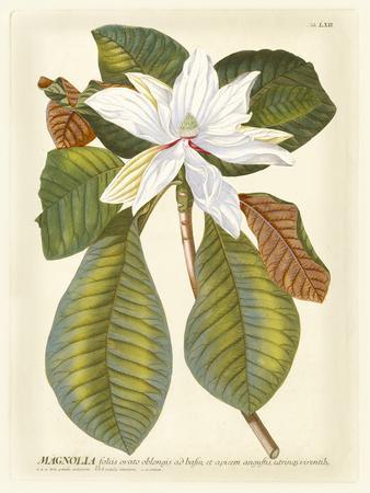 https://imgc.artprintimages.com/img/print/magnificent-magnolias-ii_u-l-p8lgwx0.jpg?artPerspective=n