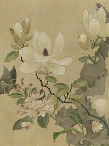 Magnolia and Butterfly