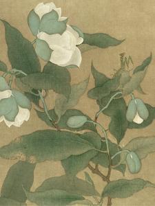 Magnolia and Praying Mantis