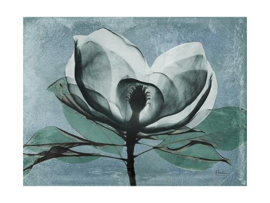 Magnolia Blues 1-Albert Koetsier-Premium Giclee Print