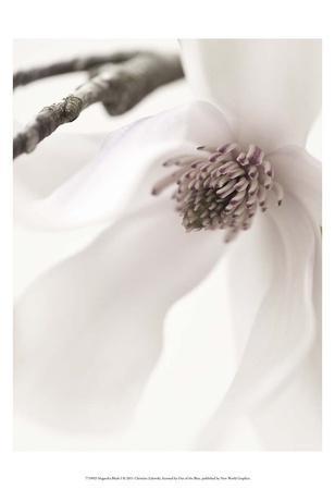 https://imgc.artprintimages.com/img/print/magnolia-blush-i_u-l-f561ea0.jpg?p=0