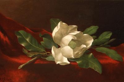 Magnolia, C.1885-95-Martin Johnson Heade-Giclee Print