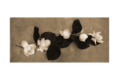 https://imgc.artprintimages.com/img/print/magnolia-display_u-l-pzj0mg0.jpg?p=0