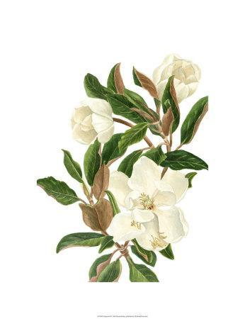 https://imgc.artprintimages.com/img/print/magnolia-ii_u-l-eznu60.jpg?p=0
