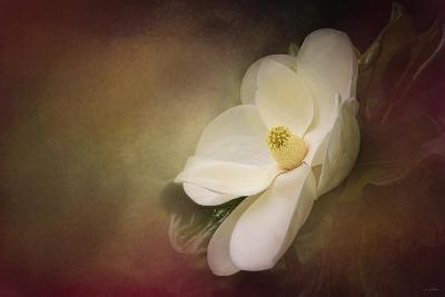 Magnolia in Bloom 1-Jai Johnson-Giclee Print
