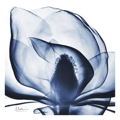 Magnolia Indigo-Albert Koetsier-Art Print
