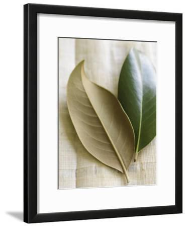 Magnolia Leaves I