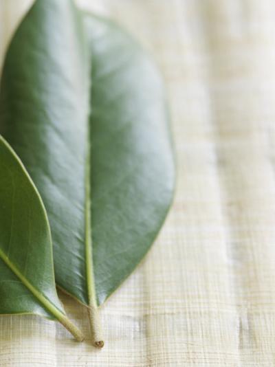 Magnolia Leaves II--Photo