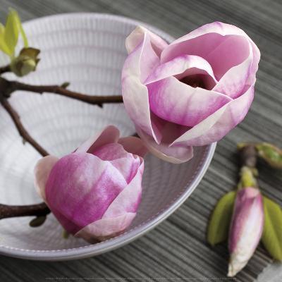 Magnolia on a Bowl-Catherine Beyler-Art Print