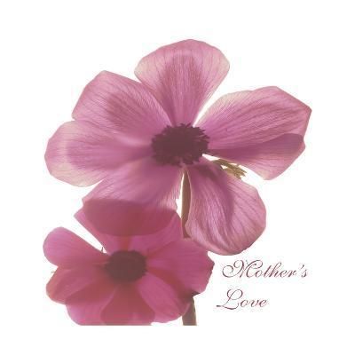 Magnolia Pair-Albert Koetsier-Premium Giclee Print