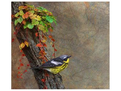 Magnolia Warbler-Chris Vest-Art Print