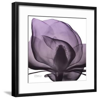 Magnolia Wine Beauty-Albert Koetsier-Framed Art Print