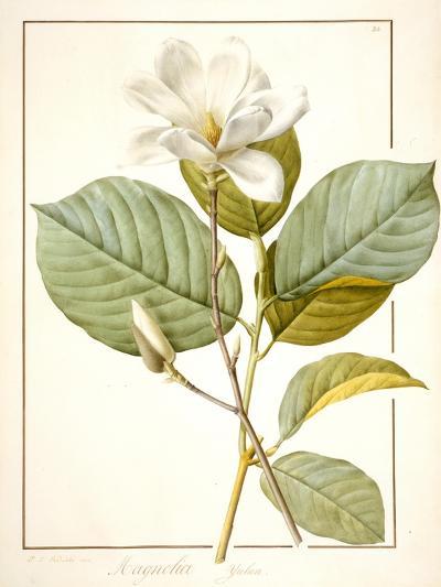 Magnolia Yulan, Magnolia Denudata, 1812 (W/C and Bodycolour over Traces of Graphite on Vellum)-Pierre Joseph Redoute-Giclee Print