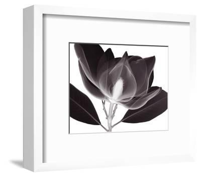 Magnolia-Steven N^ Meyers-Framed Art Print