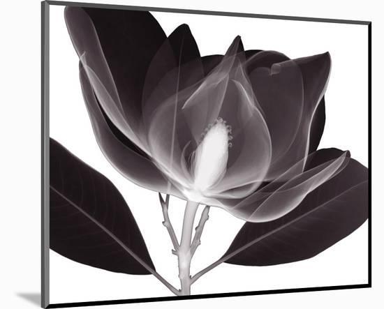 Magnolia-Steven N^ Meyers-Mounted Art Print