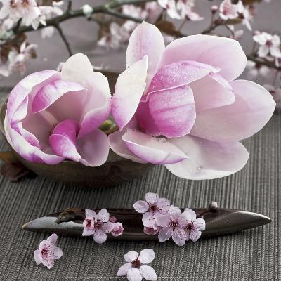 Magnolia-Catherine Beyler-Art Print