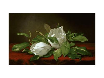 Magnolia-Martin Johnson Heade-Giclee Print
