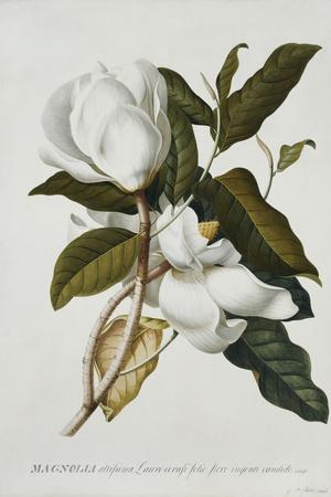 https://imgc.artprintimages.com/img/print/magnolia_u-l-pm53kw0.jpg?p=0
