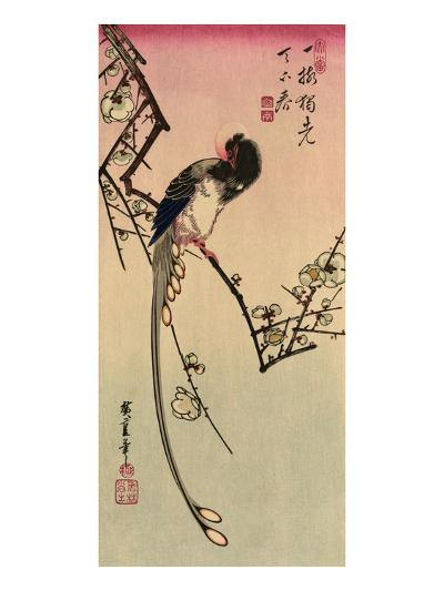 Magpie, 19th Century-Ando Hiroshige-Giclee Print