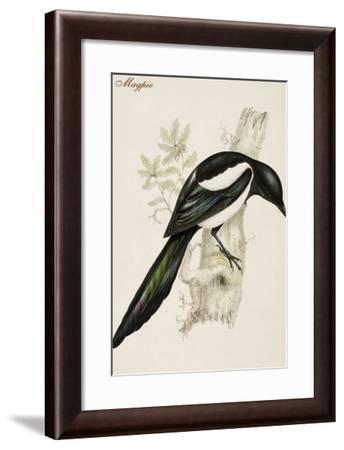 Magpie-John Gould-Framed Art Print