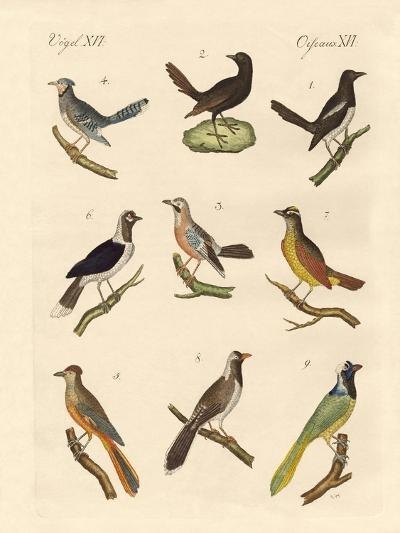 Magpies and Jays--Giclee Print