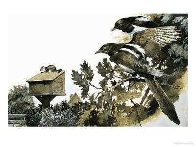Magpies Watching a Stoat Atop a Bird House-G^ W Backhouse-Giclee Print
