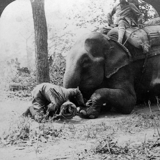 Mahout Removing a Thorn from an Elephant's Foot, Behar Tiger Shoot, India, C1900s-Underwood & Underwood-Photographic Print