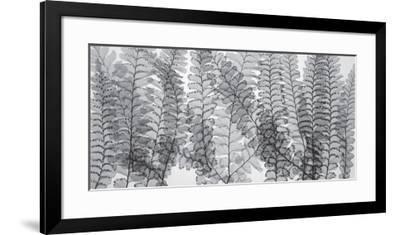 Maidenhair Ferns-Steven N^ Meyers-Framed Art Print
