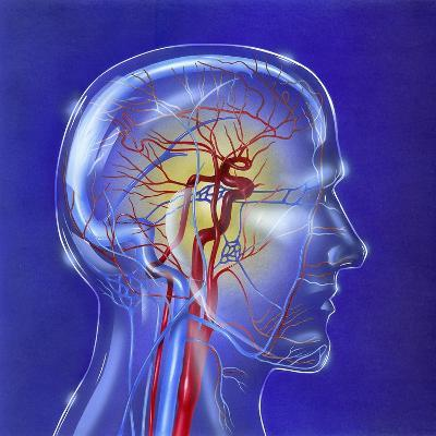 Main Arteries and Veins Within a Glass Head--Art Print