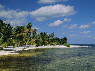 Main Dive Site in Belize, Ambergris Caye, Belize, Central America-Gavin Hellier-Photographic Print