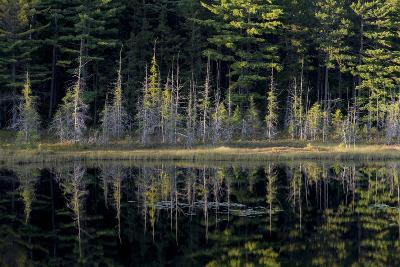 Maine, Baxter State Park, Reflections on Abol Pond-Judith Zimmerman-Photographic Print
