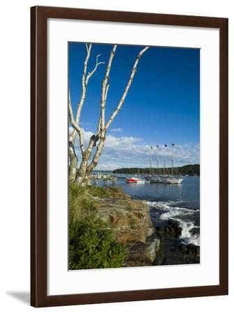 Maine, Mt. Desert Island, Bar Harbor, Tall Ship, Frenchman Bay-Walter Bibikow-Framed Photographic Print