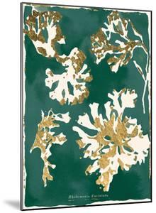 Rhodomenia Laciniata - Jewel by Maja Gunnarsdottir