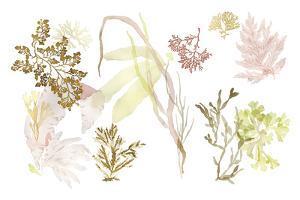 Seaweed Study by Maja Gunnarsdottir