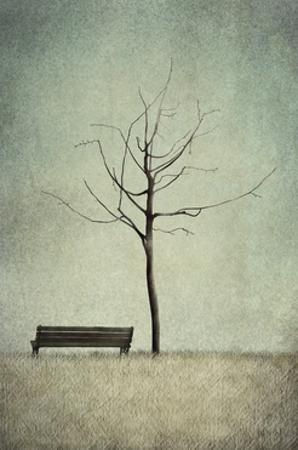 The Cherry Tree - Winter by Maja Lindberg