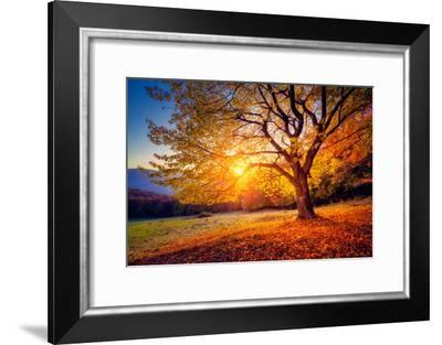 Majestic Alone Beech Tree on a Hill Slope with Sunny Beams at Mountain Valley. Dramatic Colorful Mo-Leonid Tit-Framed Photographic Print