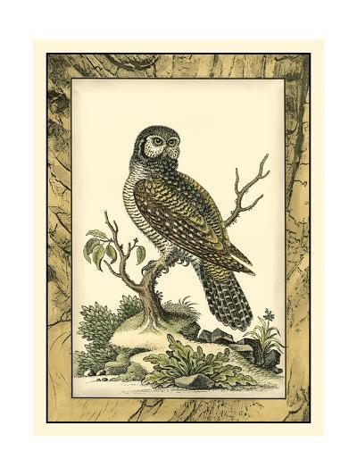 Majestic Perch III-Vision Studio-Art Print