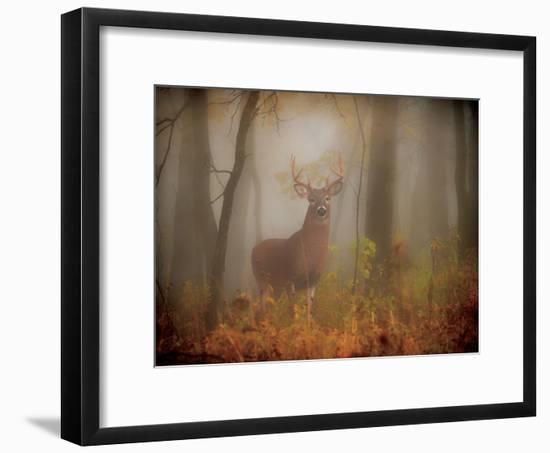 Majesty-Deb Lee Carson-Framed Photo