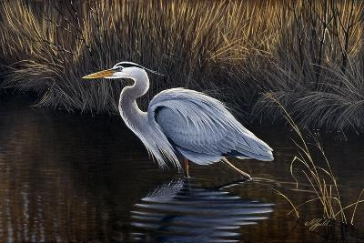 Making Strides - Great Blue Heron-Wilhelm Goebel-Giclee Print
