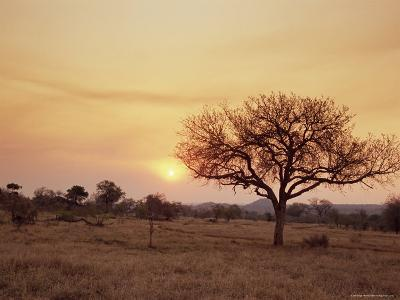 Mala Mala Game Reserve, Sabi Sand Park, South Africa, Africa-Sergio Pitamitz-Photographic Print