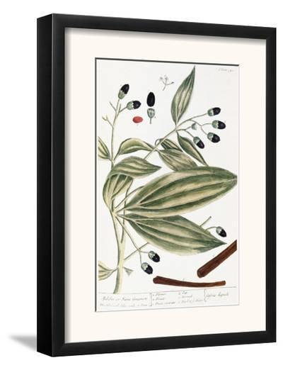 Malabar Cinnamon, 1735-Elizabeth Blackwell-Framed Giclee Print